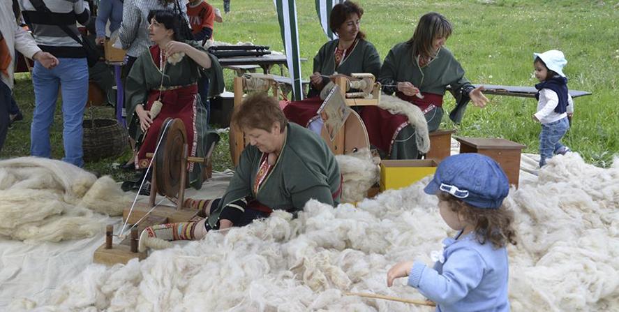 Фестиваль стрижки овец 2019
