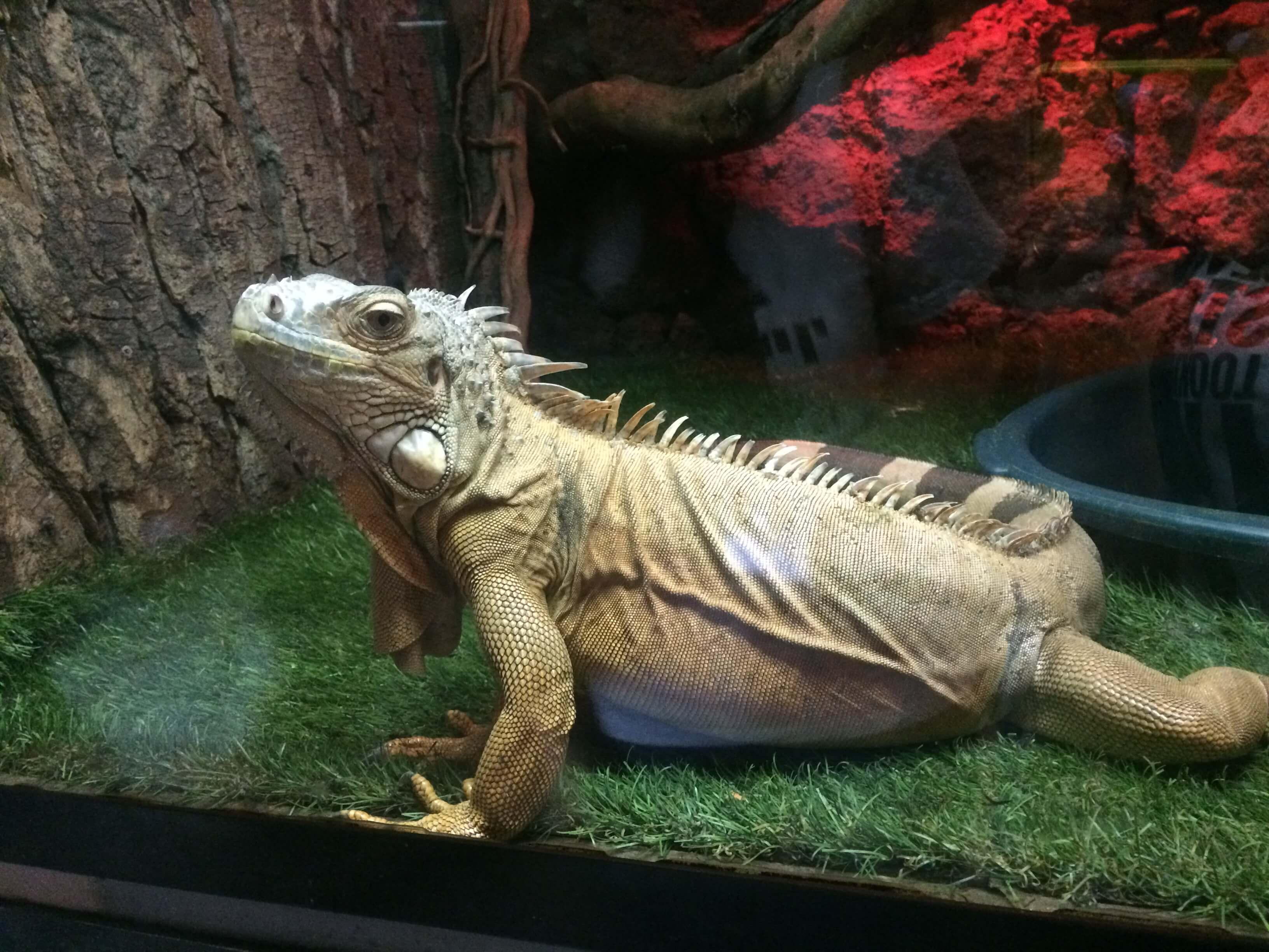 Животные Ереванского Зоопарка