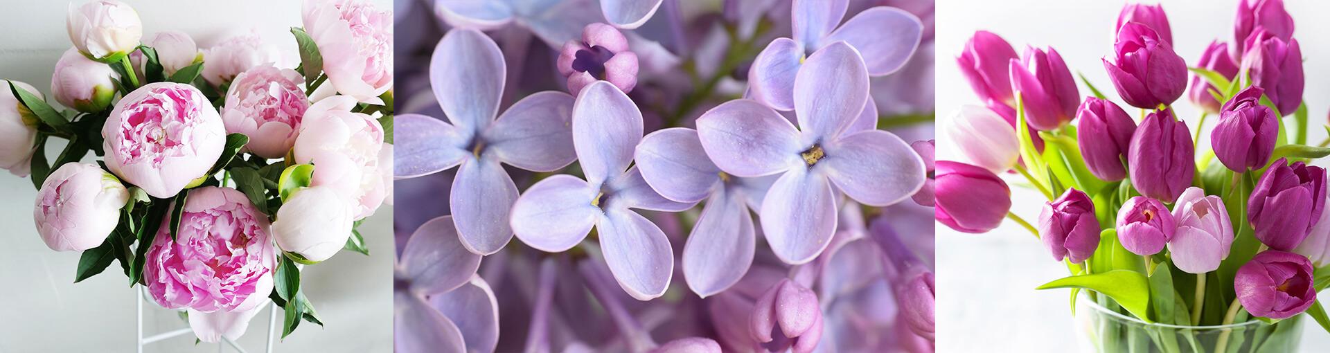 Armenian native flowers
