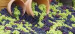 Освящение винограда