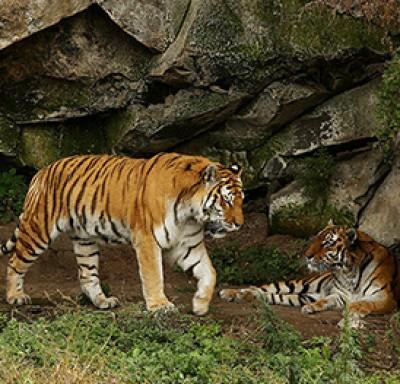 Ереванский зоопарк